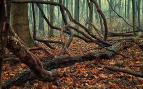 Картинка осень, лес, листва, коряги