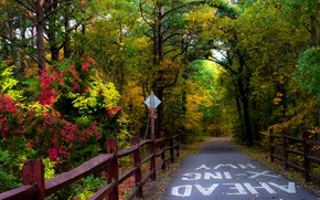 Картинка Дорога, Осень, Деревья, Лес, Fall, Autumn, Colors, Road, Forest, Trees