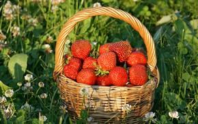 Обои цветы, лукошко, корзинка, красная, солнце, трава, клубника, ягода