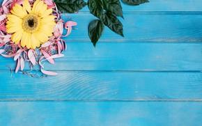 Картинка листья, лепестки, голубой фон, гербера