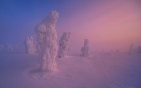 Обои зима, снег, деревья, природа, краски, сугробы, дымка, фигуры