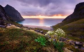 Обои море, пляж, листья, облака, закат, камни, скалы, холмы, берег, растительность, растение, вечер, горизонт, прибой