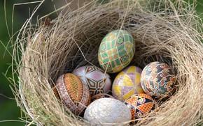 Картинка яйца, Пасха, гнездо, писанки