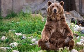 Обои лапы, важный, трава, шерсть, морда, бурый, сидит, позирует, медведь, камни