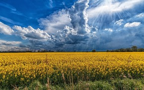 Обои облака, пейзаж, природа, поле, лучи, красота, цветы