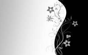 Картинка цветы, обои, узор, вектор, текстура, wallpaper, черный фон, серый фон
