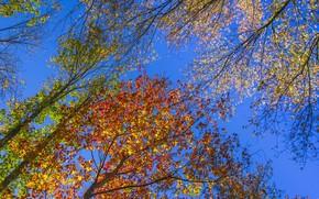 Картинка осень, небо, листья, деревья, желтый, красный, яркий