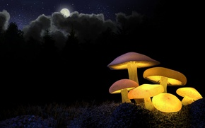 Обои лес, желтый, грибы, ночь, ели, луна, свечение, свет