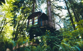 Картинка лес, деревья, природа, домик, Washington