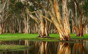 Картинка деревья, пейзаж, природа, озеро, стволы