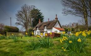 Картинка Англия, весна, домики, нарциссы, Appleby