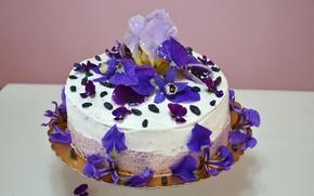 Обои крем, еда, украшение, сладкое, ирисы, фиалки, торт, цветы