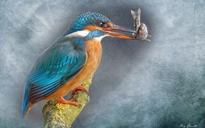 Обои живопись, Зимородок, ветка, фон, птица