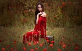 Картинка поле, девушка, цветы, маки, брюнетка, чемодан, красное платье
