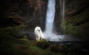 Картинка друг, водопад, собака
