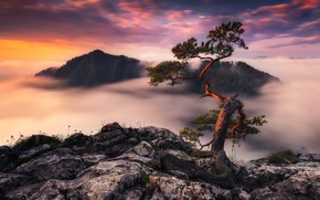 Обои облака, скалы, Германия, туман, дерво, вечер, утро