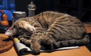 Обои кот, сон, журнал, стол, кошка