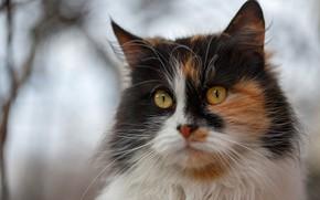 Картинка кошка, глаза, кот, взгляд, морда, ветки, фон, портрет, мордочка, киса, лапочка, желтые глаза, пушистая, размытый, …