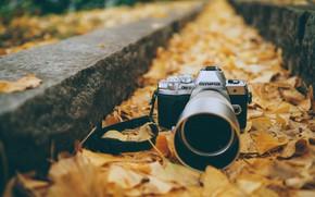 Картинка осень, листья, фотоаппарат