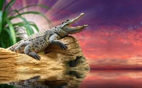 Картинка природа, рассвет, размытость, крокодил, animals, nature, водоем, боке, аллигатор, crocodile, travel, wallpaper., my planet, кайман, …