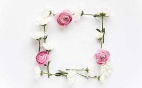 Картинка цветы, розовые, хризантемы, pink, flowers, пионы, peonies