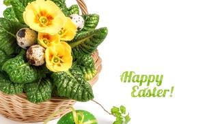 Картинка цветы, желтый, праздник, пасха, корзинка, примула, Anya Ivanova