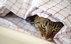 Картинка глаза, кот, взгляд, спрятался
