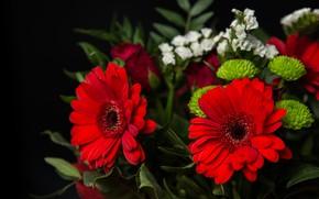 Картинка букет, хризантема, гербера