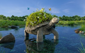 Обои turtle, черепаха, водоём, Petite balade bucolique, лягушка