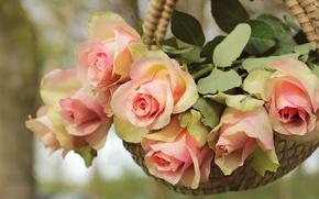 Картинка листья, цветы, природа, фон, роза, розы, букет, лепестки, нежные, розовые, корзинка, бутоны, висит, композиция, кашпо