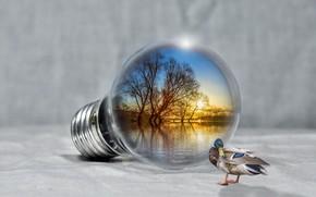 Обои закат, релакс, лампочка, утка, озеро