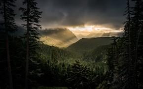 Картинка лес, ночь, природа