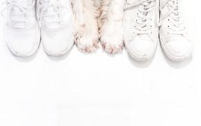 Картинка фон, обувь, собака