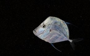 Картинка фон, рыба, плоская