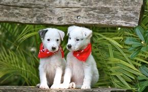 Обои животные, собаки, скамья, щенки, пара, листья, платки, зелень, ветки