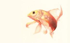 Картинка рыбка, арт, изгиб, плавники
