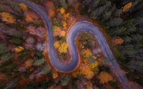 Обои природа, лес, осень, вид сверху, дорога