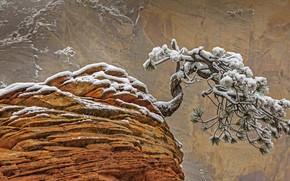 Картинка снег, скала, дерево, Юта, США, Национальный парк Зайон