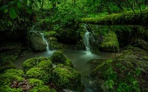 Картинка зелень, лес, мох, Швейцария, водопады, Switzerland, ручьи, Kaltbrunnen Valley