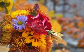 Картинка Цветы, Букет, Flowers, Colors, Bouquet