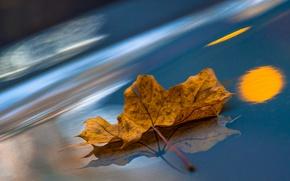 Картинка макро, лист, отражение, кленовый лист