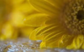 Картинка цветок, макро, фон
