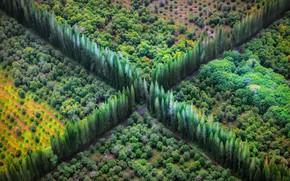 Картинка дорога, деревья, перекресток, вид сверху, сады