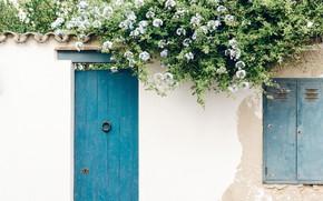 Обои цветы, flowers, wall, door, стена, дверь