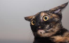 Картинка глаза, кот, уши
