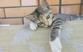 Картинка кошка, котёнок, киса