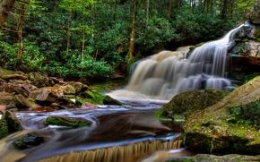 Обои лес, деревья, ручей, камни, водопад, США, Elakala Falls, Blackwater Falls State Park