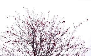 Картинка Небо, Зима, Дерево, Сакура, Куст, Черное, Белое, Рябина, Красное, Ягода, Калина, Японские мотивы