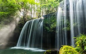 Картинка лес, деревья, водопад