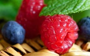 Обои ягоды, малина, еда, черника